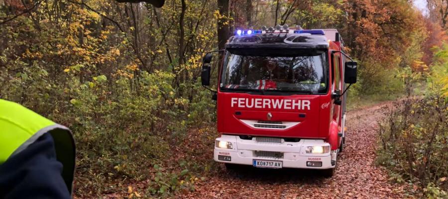 LF-W im Wald